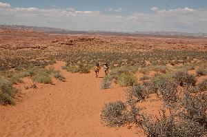 Horseshoe Desert